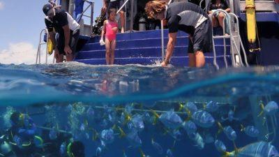 Down Under Cruise Dive01