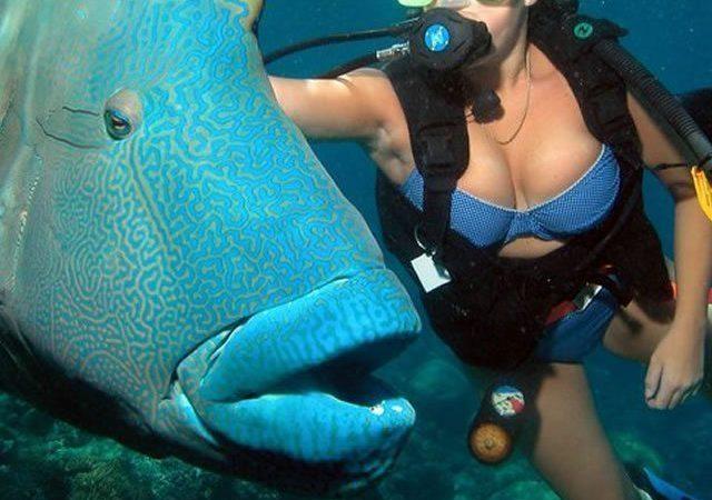 Down Under Cruise Dive04