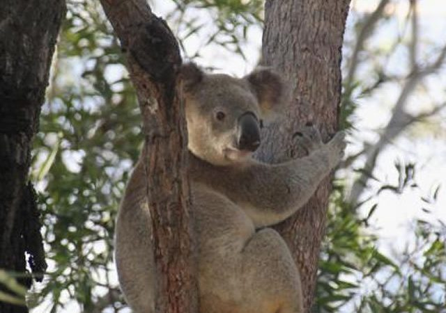 Fraser Island Adventure Tours02