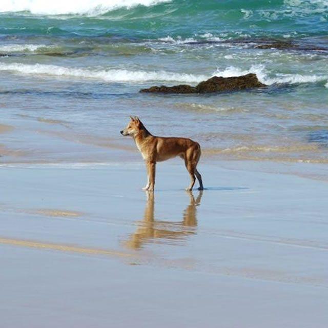 Fraser Island Adventure Tours03