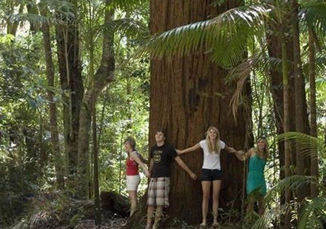 Fraser Island Adventure Tours04