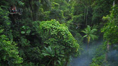 Jungle Surfing07