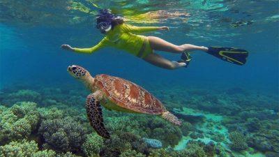 Ocean Safari09